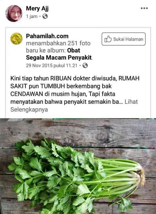 viral daun seledri