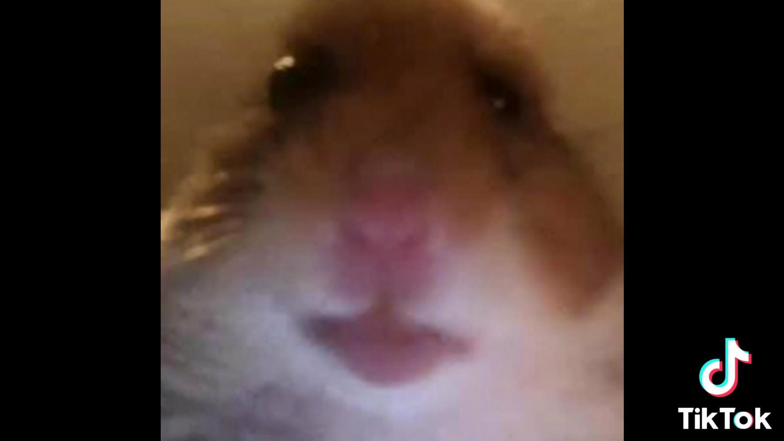 Foto Pp Hamster Lucu Ini Lagi Viral Di Tiktok Frankenstein45 Com